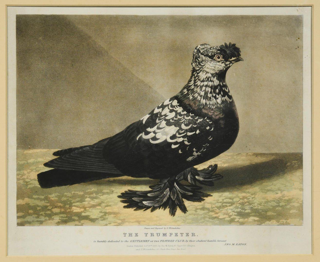 Lot 96: Pigeon Portrait Prints & Chicken Painting