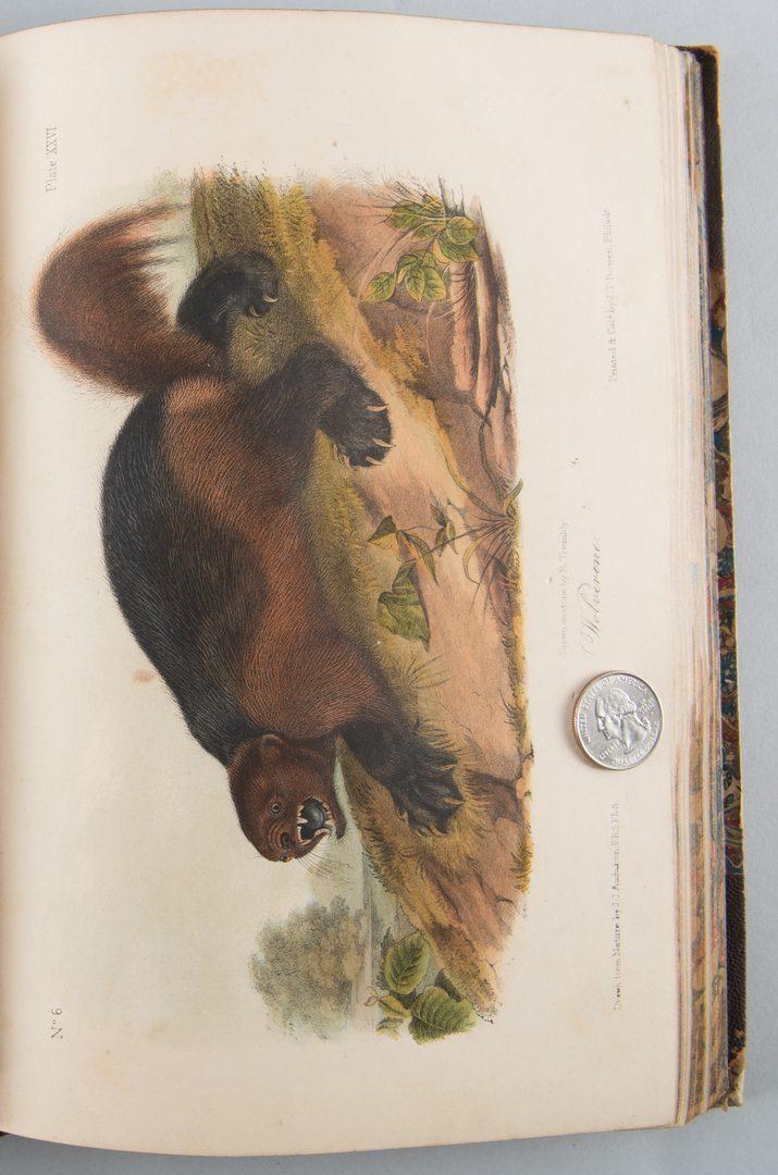 Lot 555: J.J. Audubon: 3 Vols. Quadrupeds of America