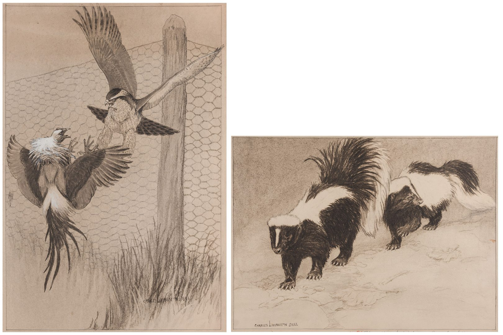 Lot 784: 2 Chas. L. Bull illustrations, skunks and hawk