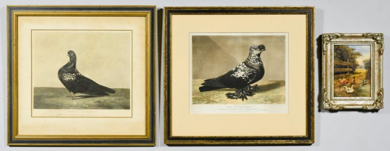 Lot 58: Pigeon Portrait Prints & Chicken Painting