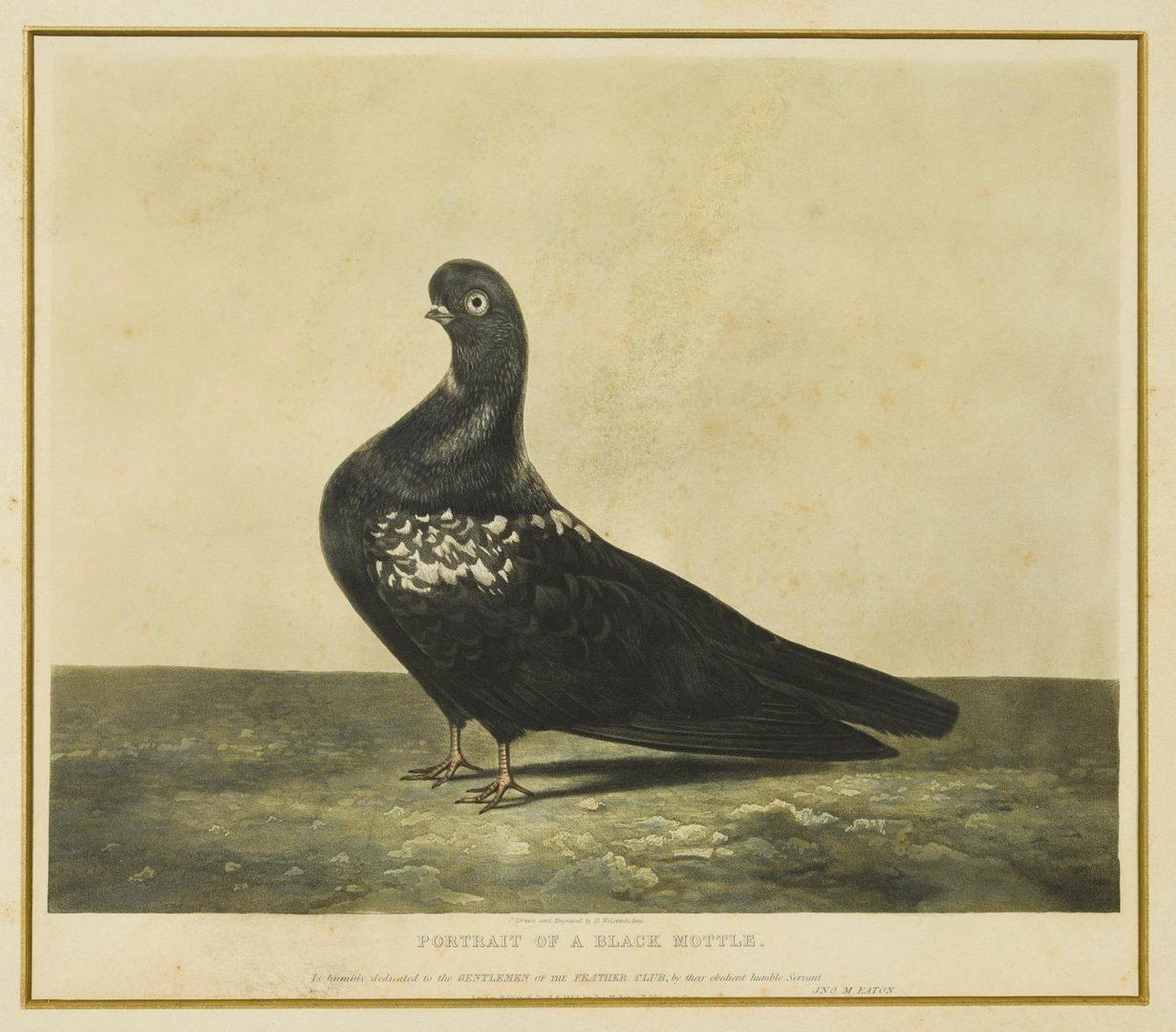 Lot 58: Pigeon Portrait Prints & Chicken Painting