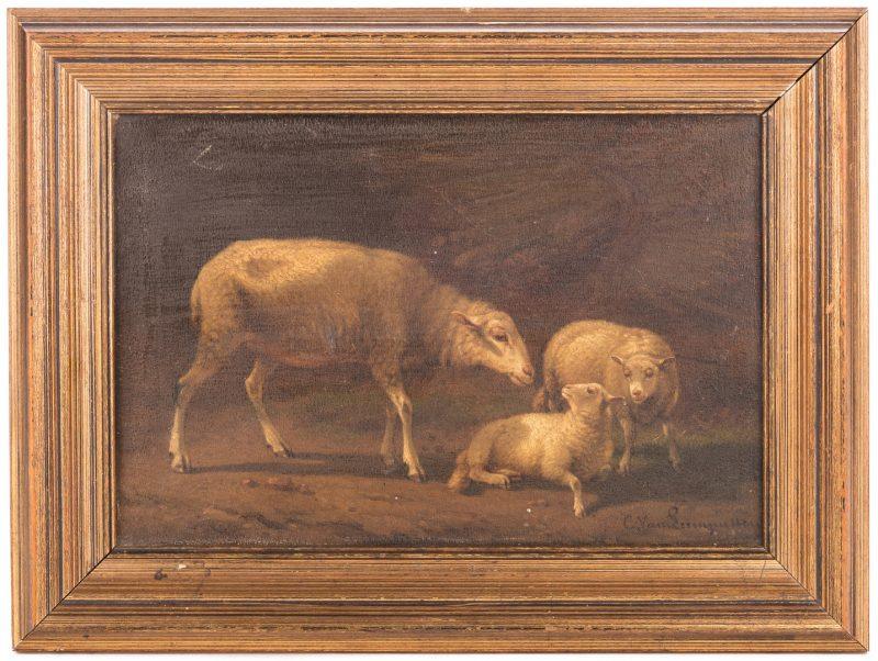 Lot 162: Cornelius van Leemputten, O/B, Sheep