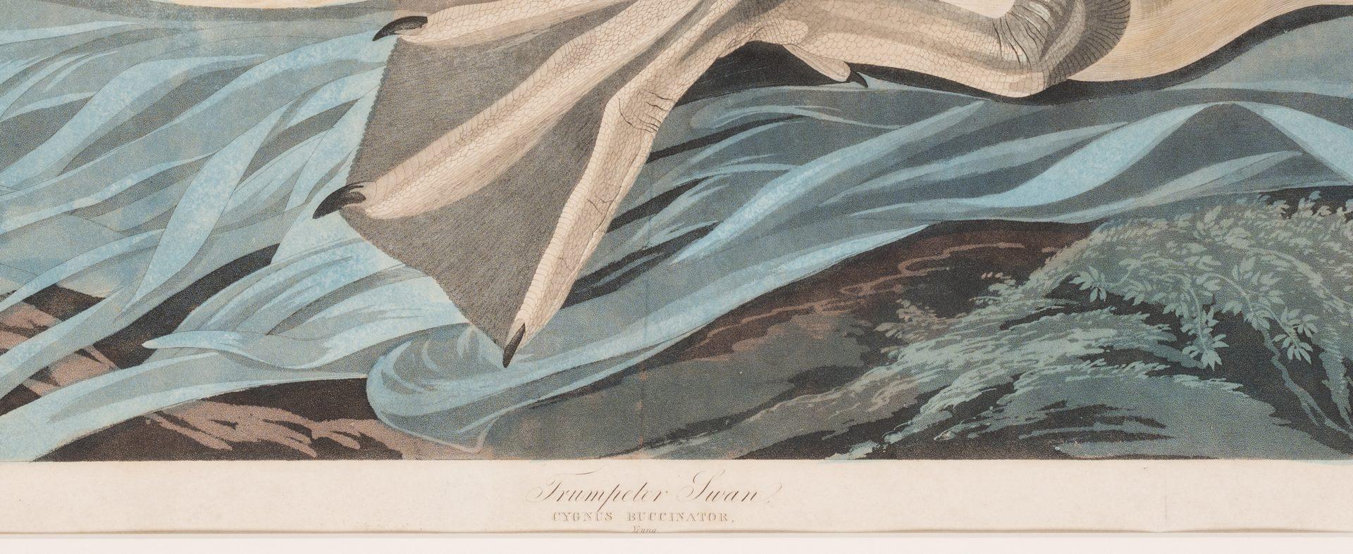 Lot 451: John J. Audubon Trumpeter Swan, Havell ed.