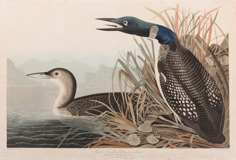 Lot 452: J.J. Audubon, Great Northern Diver or Loon