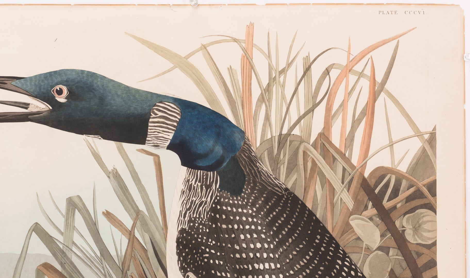 Lot 452: J.J. Audubon, Great Northern Diver or Loon