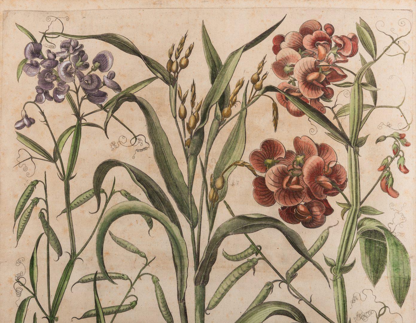 Lot 742: Basilius Besler Botanical Print