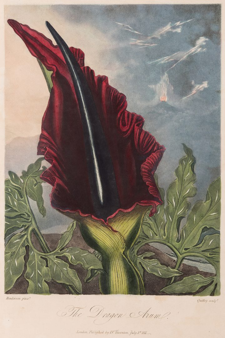 Lot 743: 4 Temple of Flora Engravings, R.J. Thorton, 1812