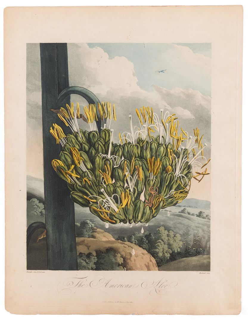 Lot 744: Large Thornton-American Aloe