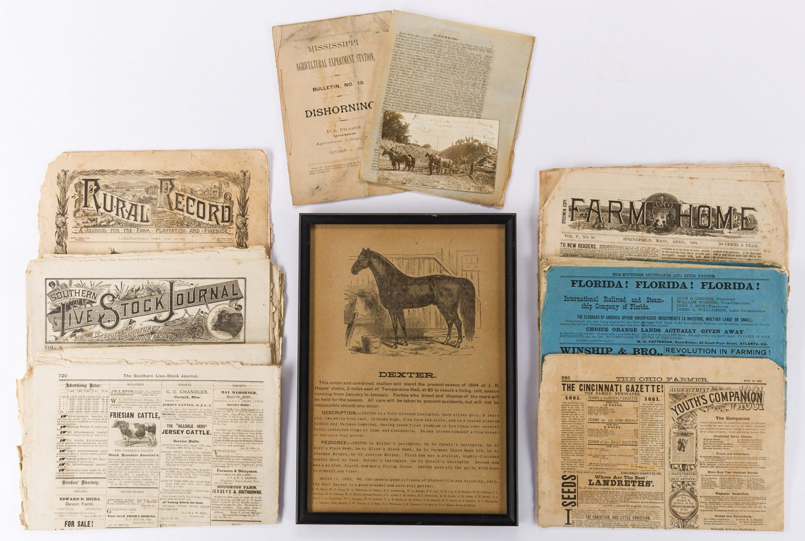 Lot 761: TN Horse Broadside & Agricultural Ephemera, 10 pcs.