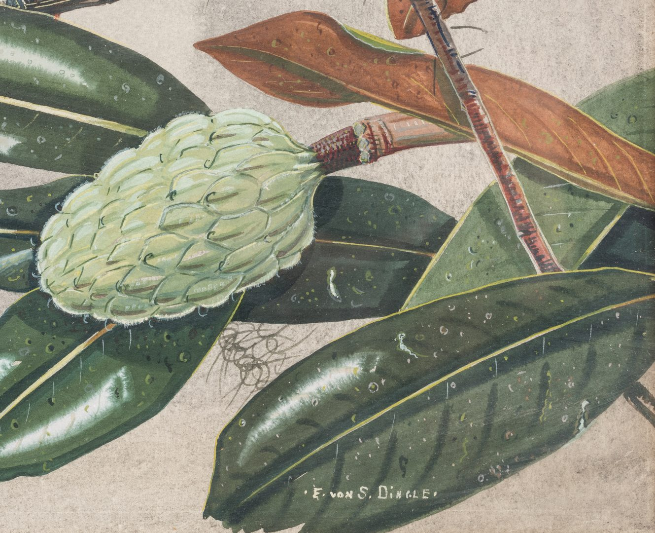 Lot 103: E. Von S. Dingle watercolor, 2 birds and Magnolia