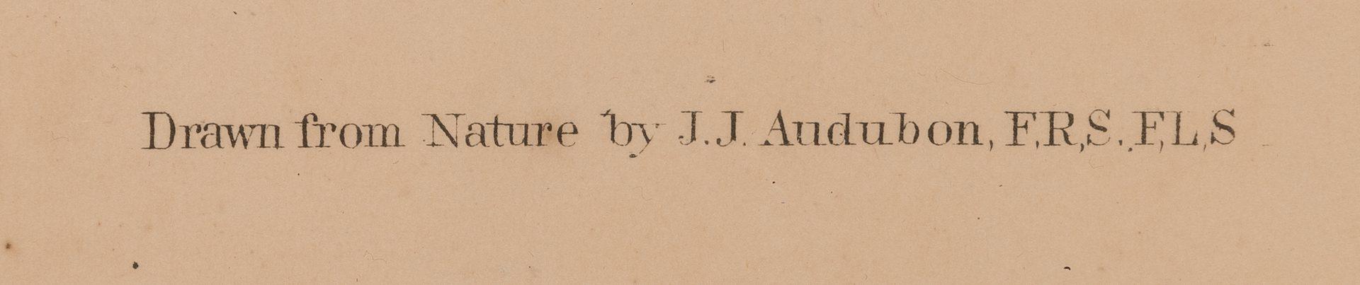 Lot 301: Audubon Bien print, Kingfisher