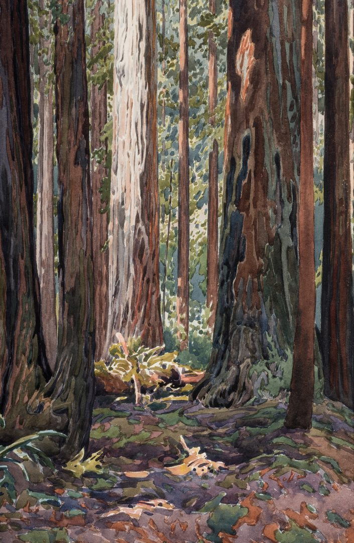 Lot 554: Gunnar Widforss Western Watercolor, In the Redwoods