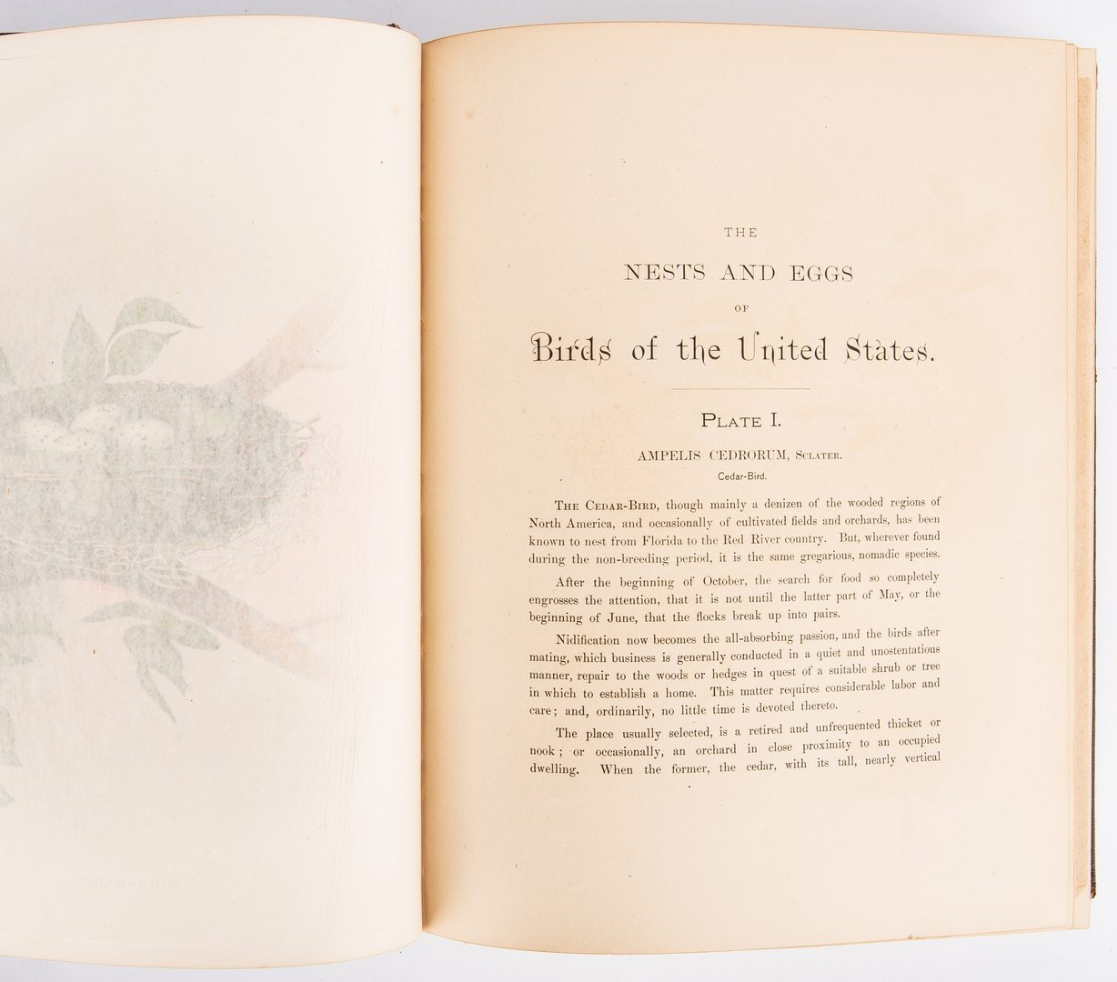 Lot 804: Gentry, Birds of the United States, 1882