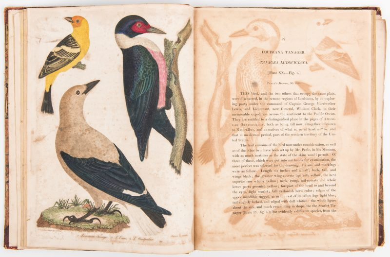Lot 805: Wilson, American Ornithology, Vol. II & V, 1812