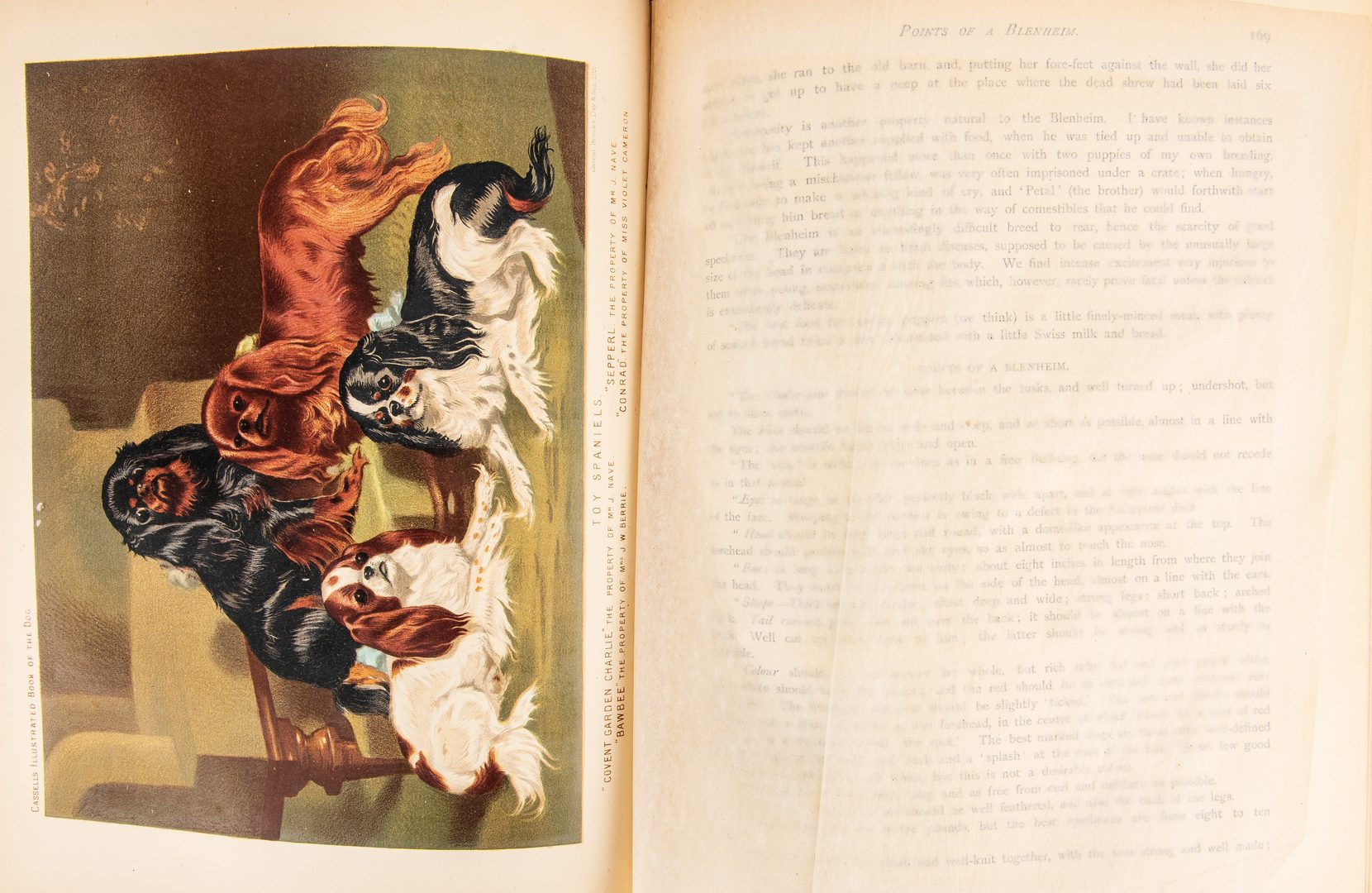 Lot 806: V. Shaw, Book of the Dog,  Circa 1881
