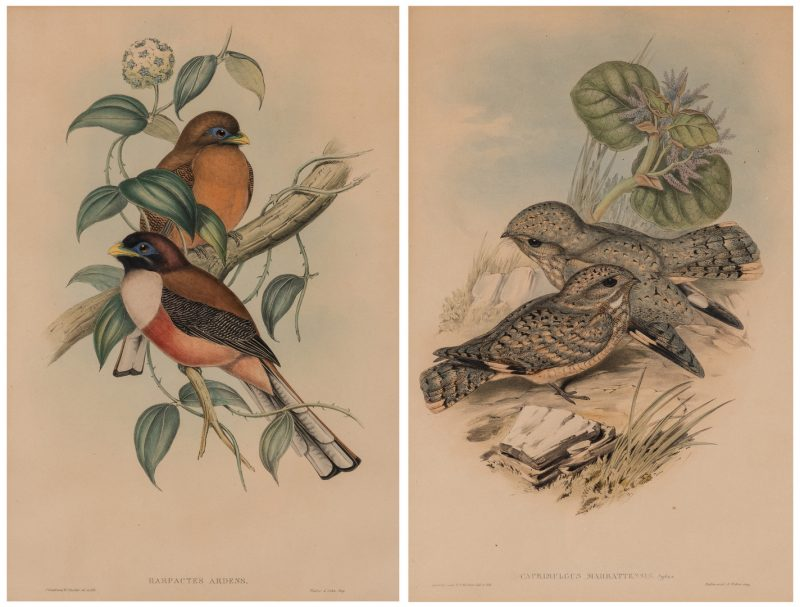 Lot 84: 2 Gould & Richter Bird Lithographs