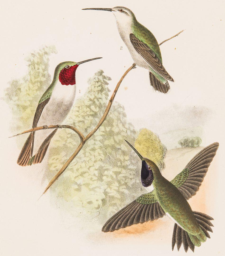 Lot 91: 3 Albums w/ 19th Cent. Bird Prints, inc. Cassin, Bowen