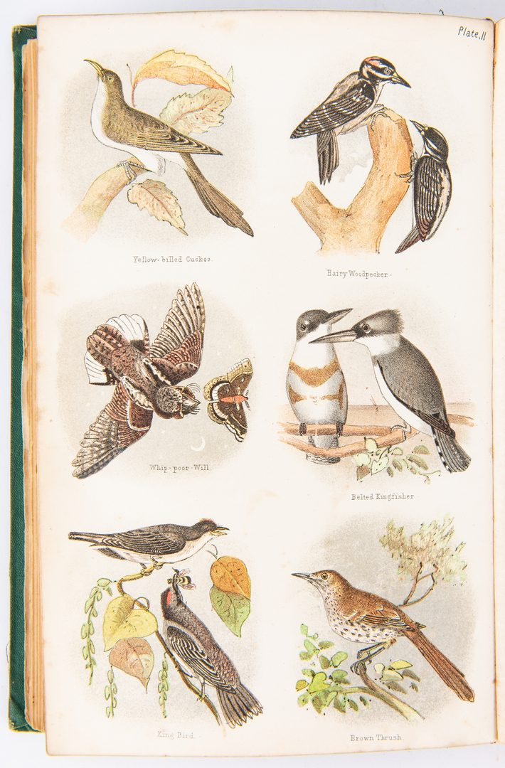 Lot 93: 3 Bird Books: Birds of NE and PA, Hawks and Owls