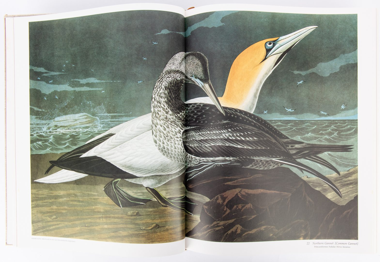 Lot 99: R. T. Peterson, Audubon's Birds of America, 1981