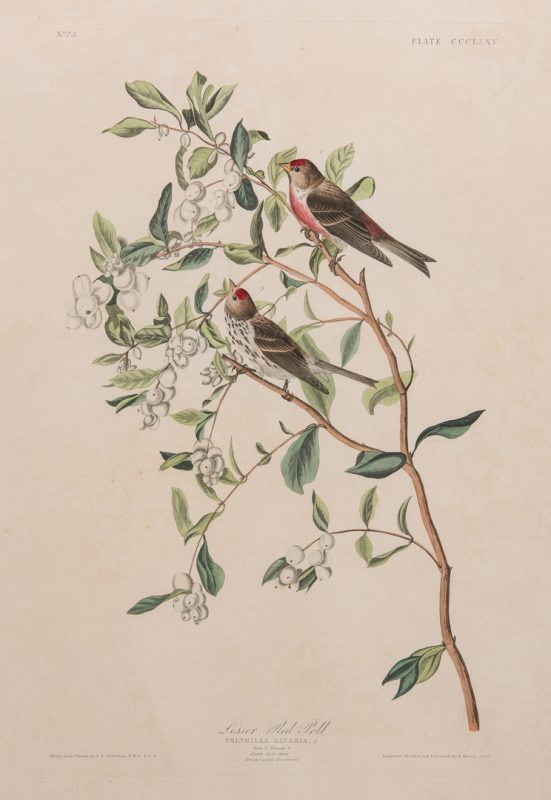 Lot 737: John J. Audubon Lesser Red-Poll, Havell ed.