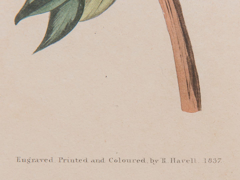 Lot 737: John J. Audubon Lesser Red-Poll, Havell ed.