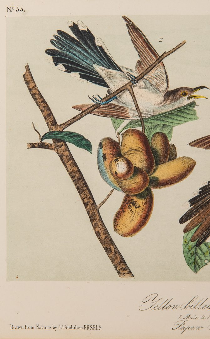 Lot 359: 11 After Audubon Octavo Prints