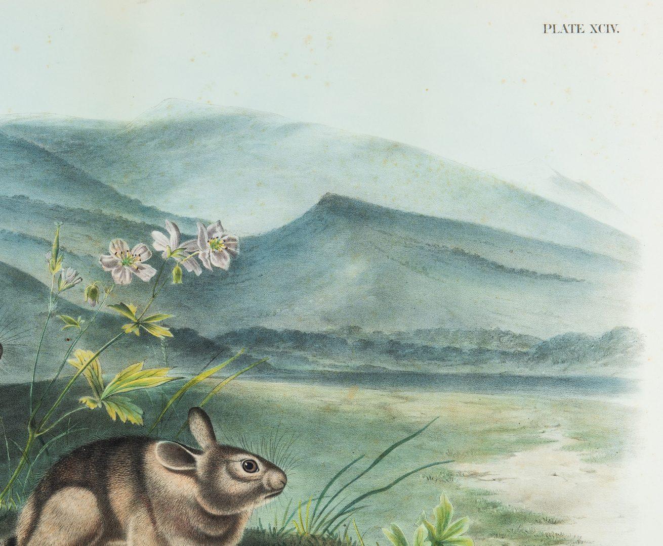 Lot 360: Audubon Nuttal's Hare, Bowen edition.