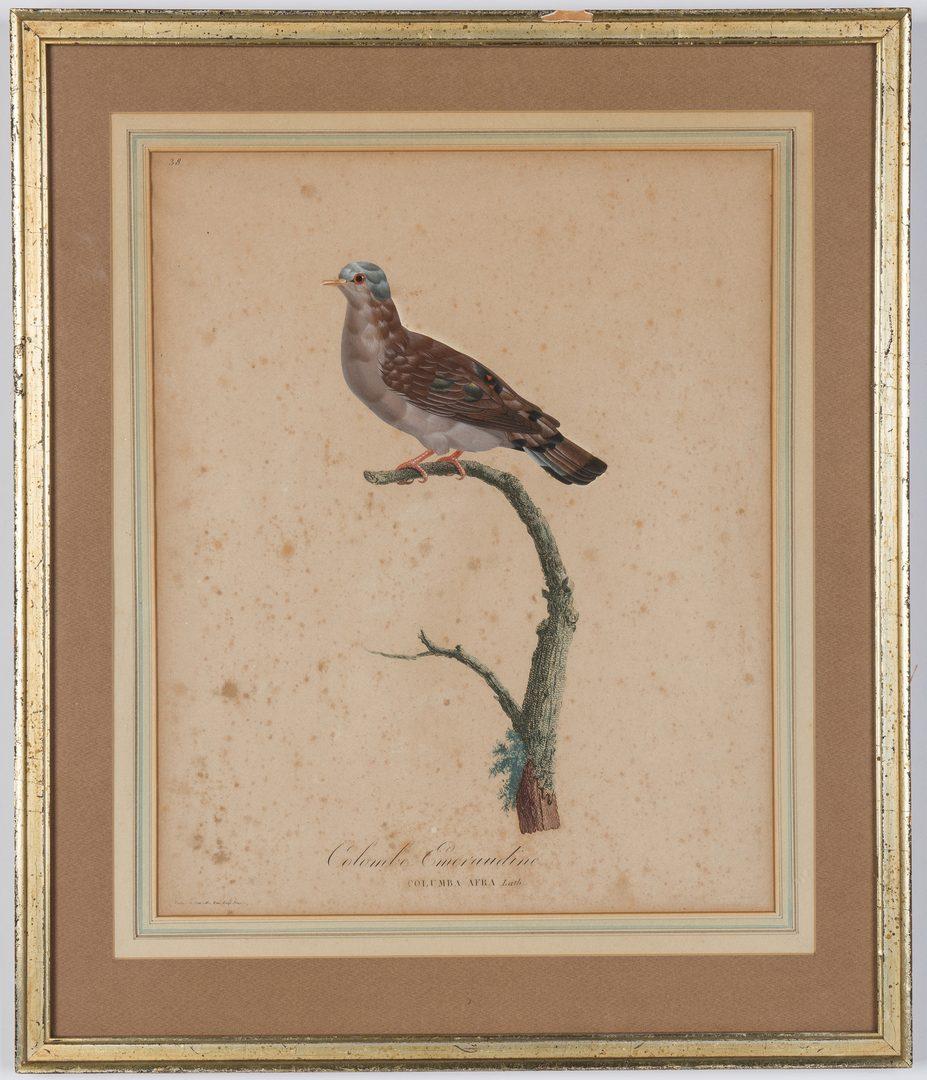 Lot 361: 5 Pauline Knip French Bird Prints, 19th c.