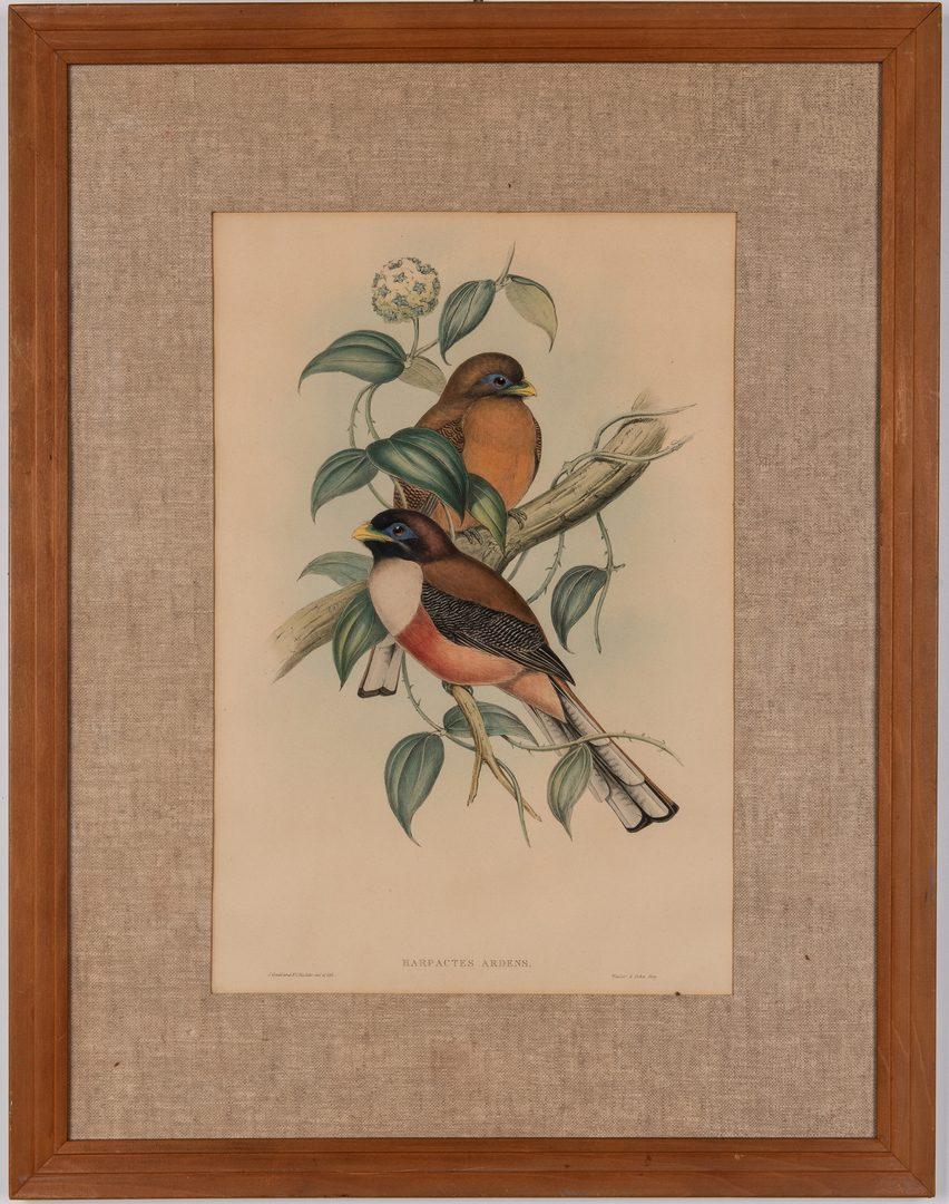 Lot 362: 2 Gould & Richter Bird Lithographs