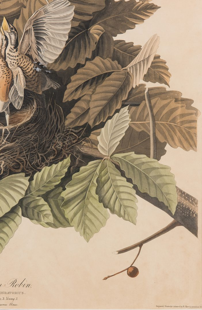Lot 689: J. Audubon, American Robin, Havell Edition