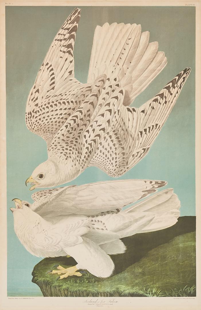 Lot 111: Audubon Bien Edition, Falcon