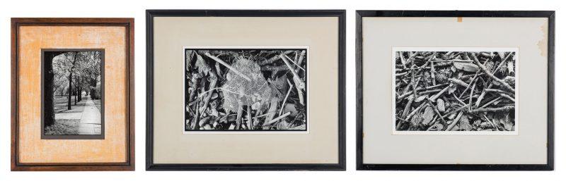 Lot 555: 3 John Stuart Ingle Photographs, Driftwood & Sidewalk