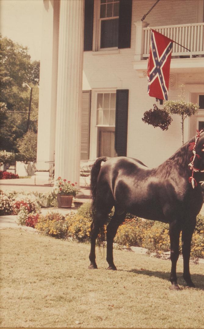 Lot 1018: 2 Vintage TN Walking Horse Photographs