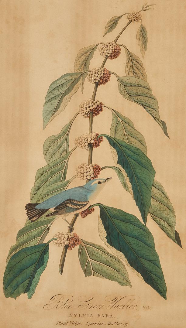 Lot 668: J. Audubon, Blue-Green Warbler, Havell Edition