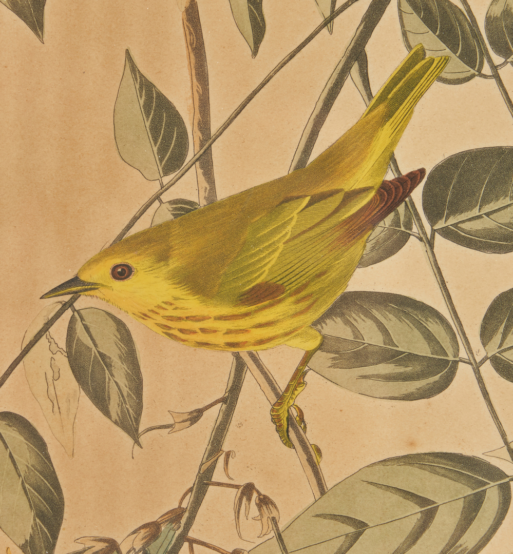 Lot 669: J. Audubon, Yellow-Poll Warbler, Havell Edition