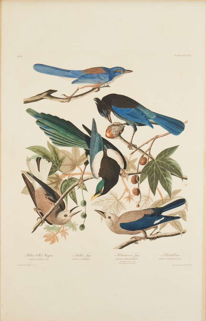 Lot 129: J. Audubon Havell Ed. Yellow-billed Magpie, Stellers Jay, Ultramarine Jay and Clark's Crow