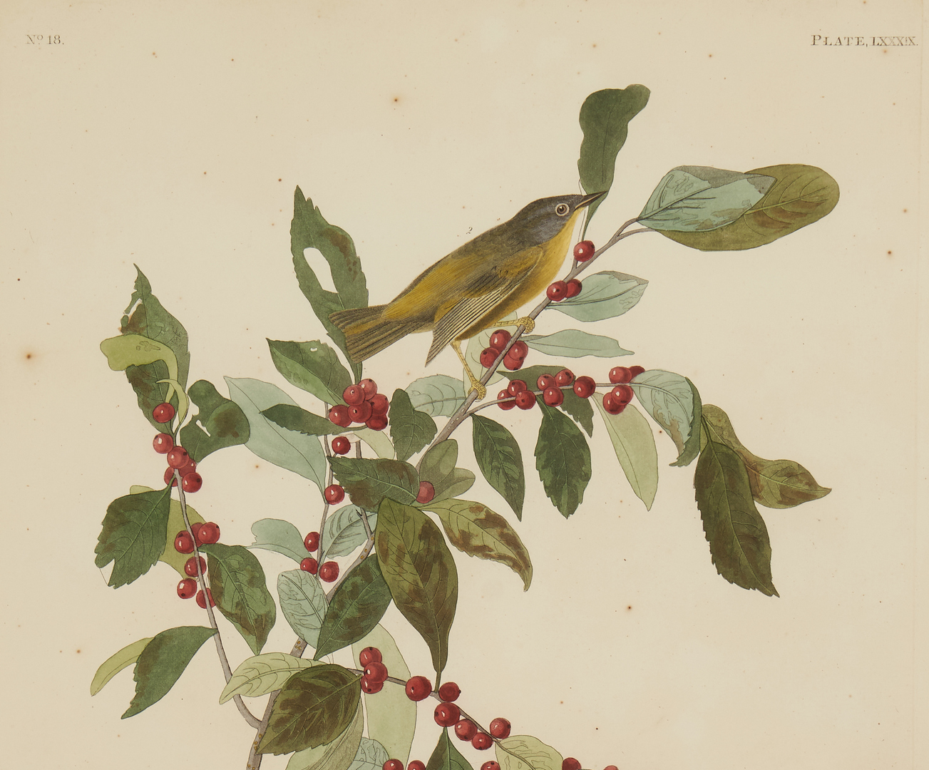 Lot 130: Audubon Havell Ed. Nashville and TN Warblers, Exhibited