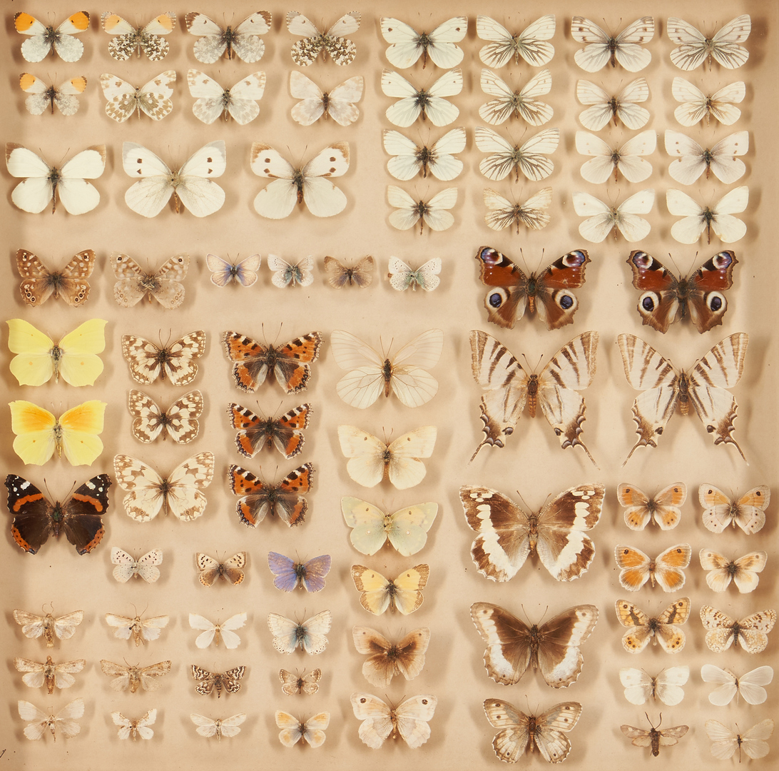 Lot 1163: 4 Framed Butterfly Specimen Collections