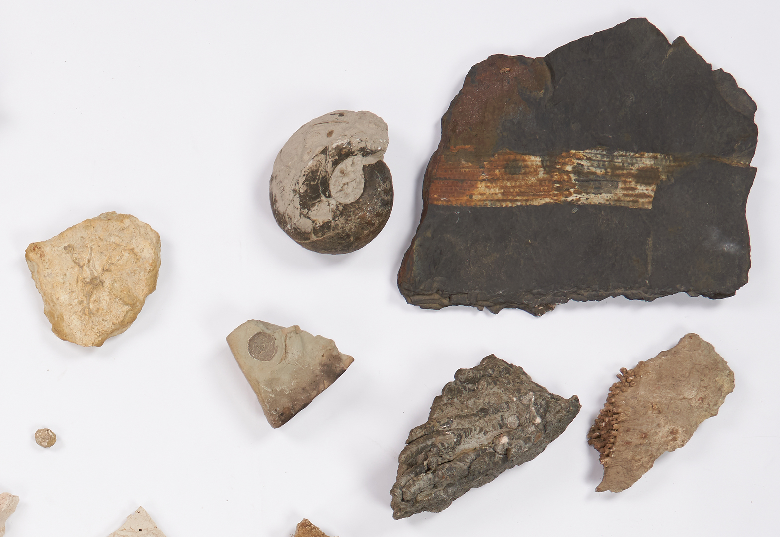 Lot 1164: Fossil & Arrowhead Collection, 100+ items