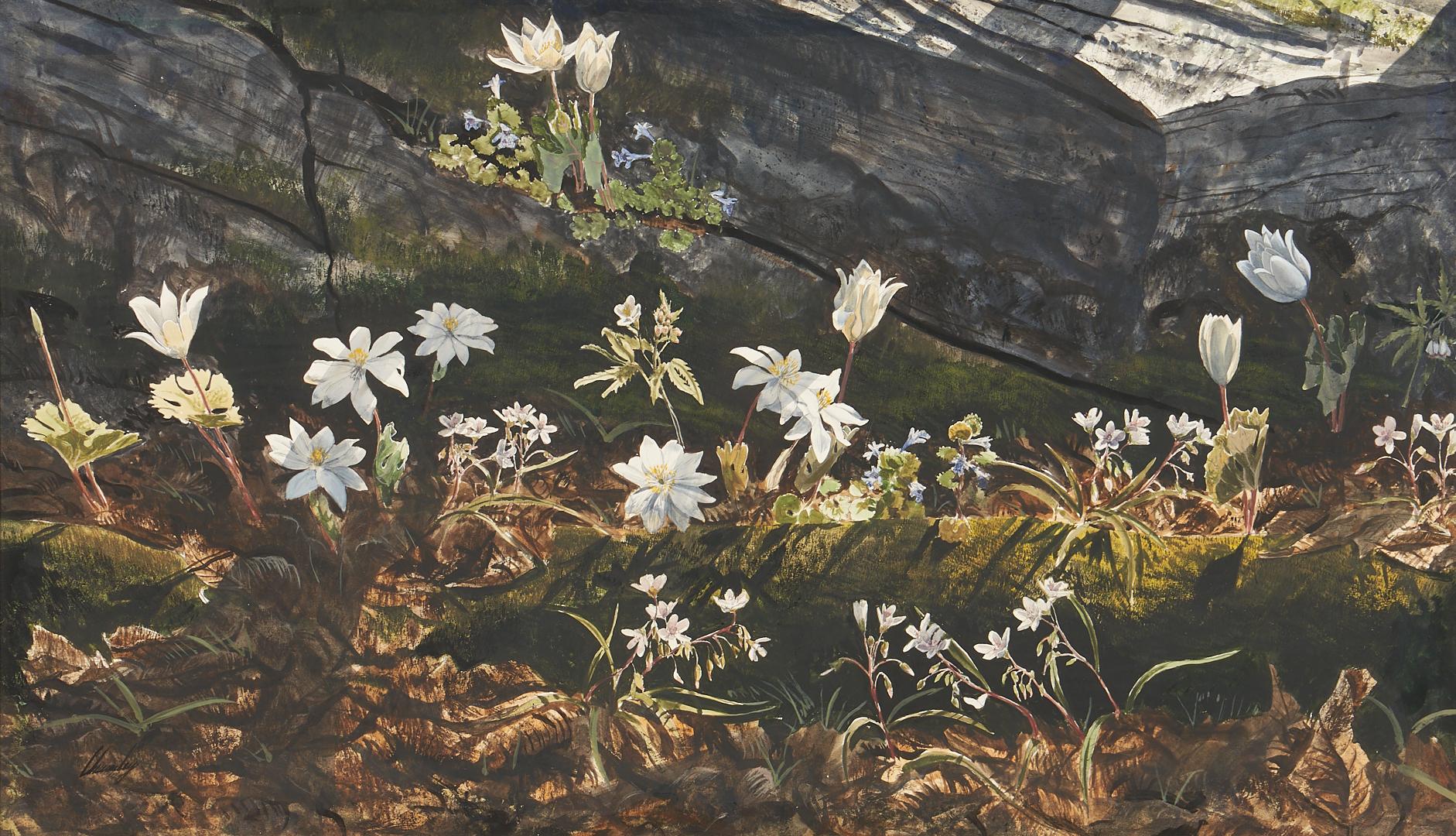 Lot 187: John Chumley Watercolor Woodland Scene, Bloodroot