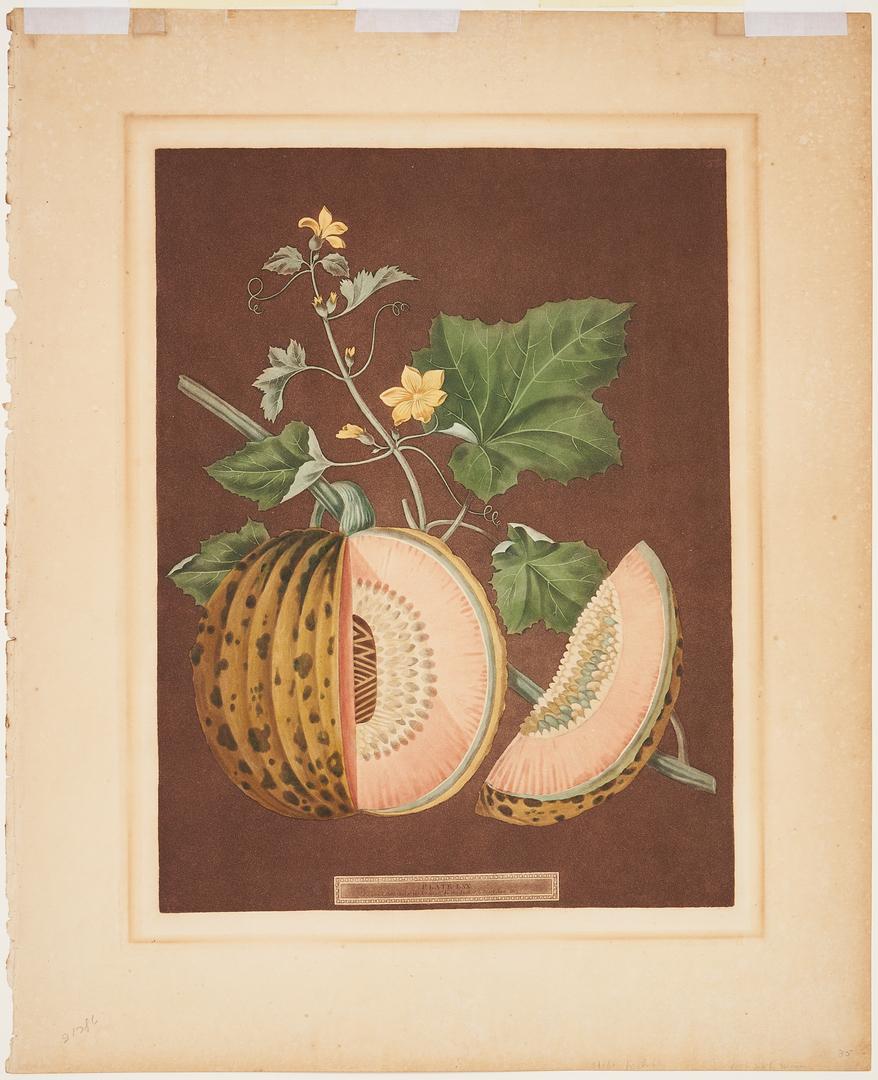 Lot 819: George Brookshaw Cantaloupe Print