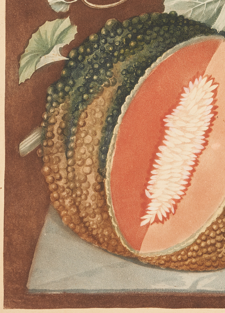 Lot 820: George Brookshaw White Seed'd Rock Melon Print