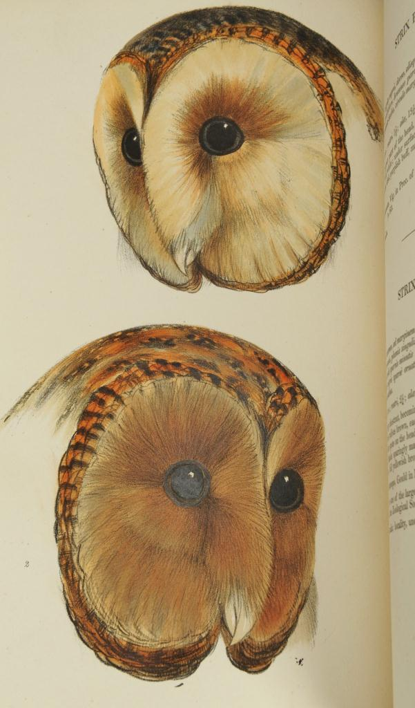 Lot 161: Gould's Synopsis of The Birds of Australia
