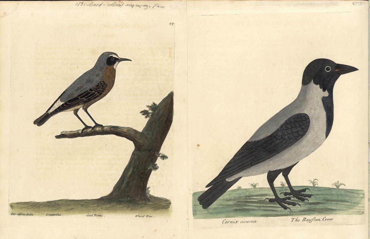 Lot 162: Eleazar Albin, 23 Bird Engravings