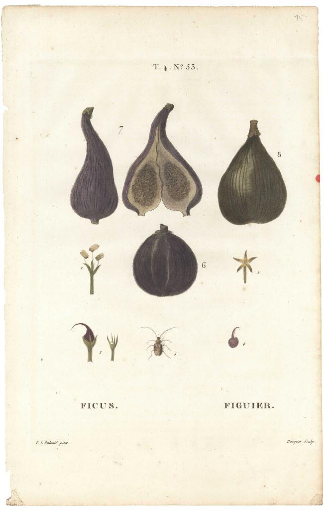 Lot 163: Redoute & Bessa fruit prints, 19th c.