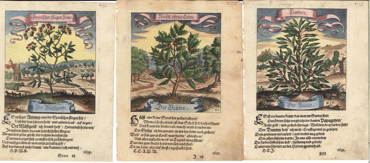 Lot 537: 21 Matthias Merian Garden Engravings 1664 and 1714