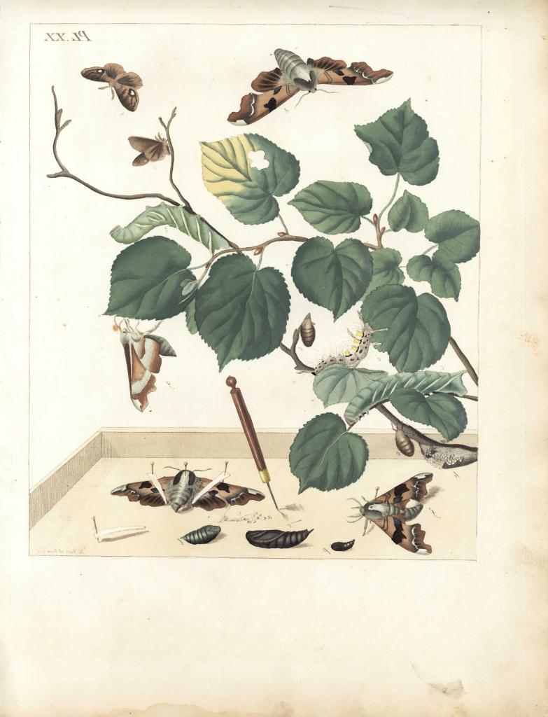 Lot 539: Group of 18th c. butterfly, tick and spider prints