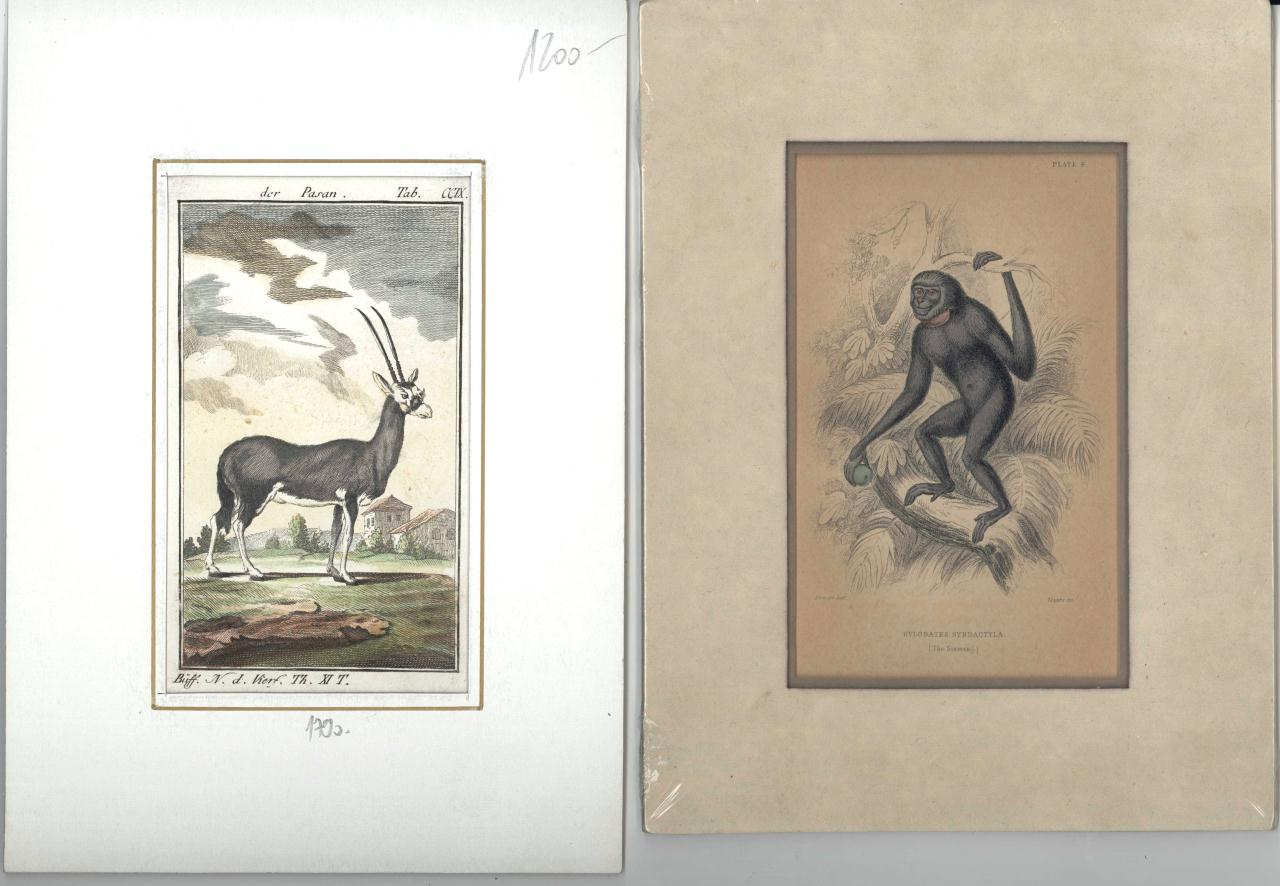 Lot 540: 7 Zoology and Botany prints, 18th and 19th c.