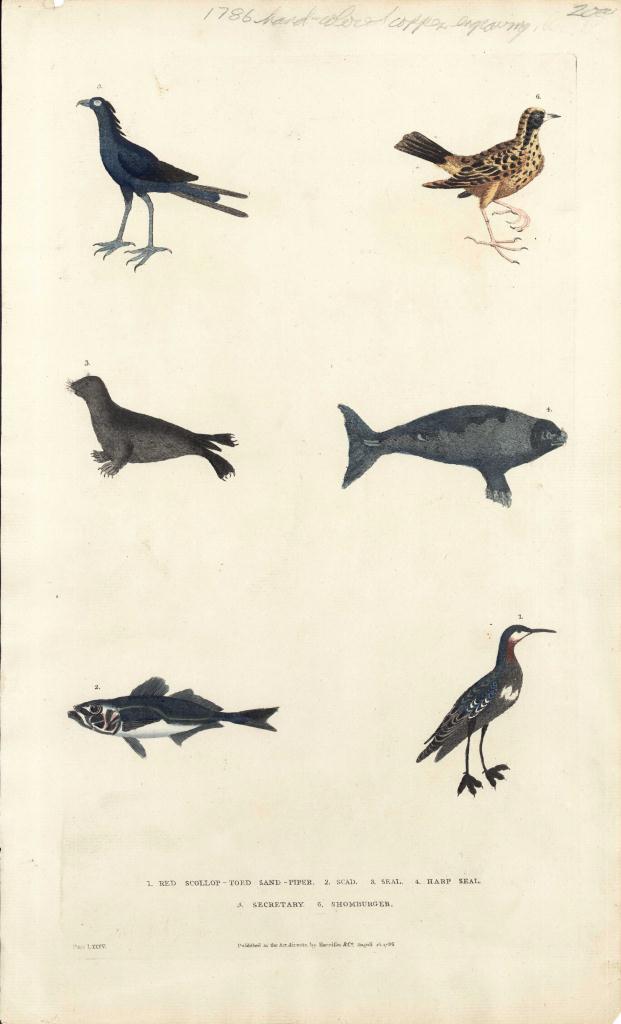 Lot 541: 6 Ornithology Bird Prints & W. Lewin egg prints