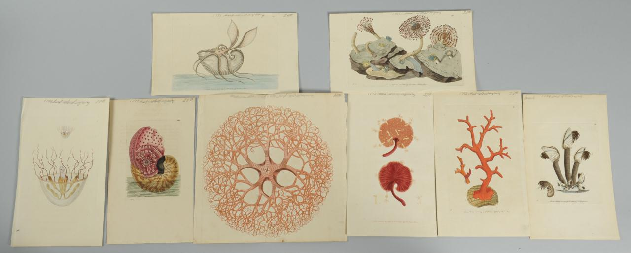 Lot 612: Collection of Sea Shells, Prints, Diorama and Neck